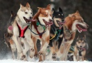 Iditarod Zeremonieller Start, Anchorage, Alaska