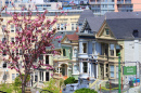 Painted Ladies, San Francisco, Kalifornien