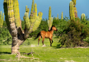 Wildes Pferd in Baja California Sur